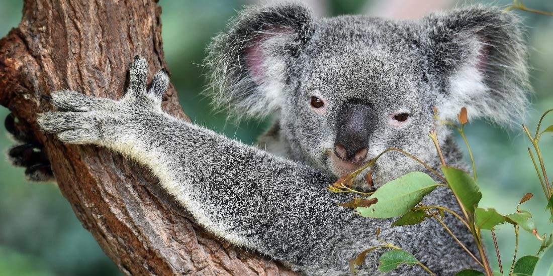 estudiar y trabajar en australia sydney 1